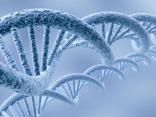 研究人员将寻找可能影响拥有无交换染色体可能性的遗传变异
