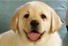 狗及其主人都有患糖尿病的风险