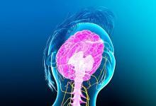 新型可能侵入中枢神经系统 引起神经系统疾病