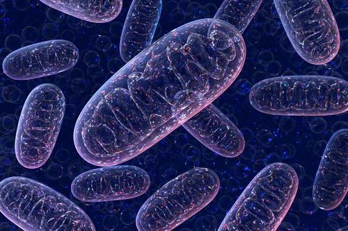 基因可以帮助预测对宫颈癌治疗的反应