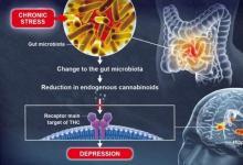 肠道菌群在大脑功能和情绪调节中起作用