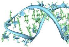 国际研究团队发现小型监管RNA的转变