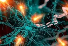 研究人员发现大脑免疫细胞的意外作用