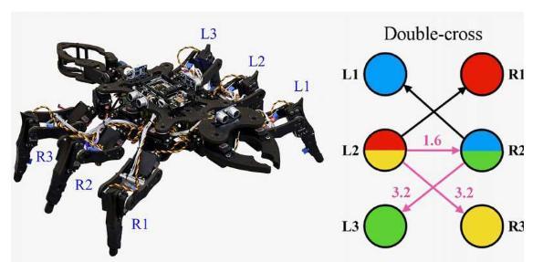 为机器人创造像昆虫一样的步态的混沌方式