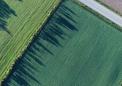 减少纳米颗粒对农药的使用