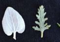 研究发现自然选择有助于维持植物多样性
