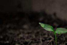 保护土壤生物多样性对适应气候变化至关重要