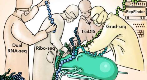 发现了新的沙门氏菌蛋白