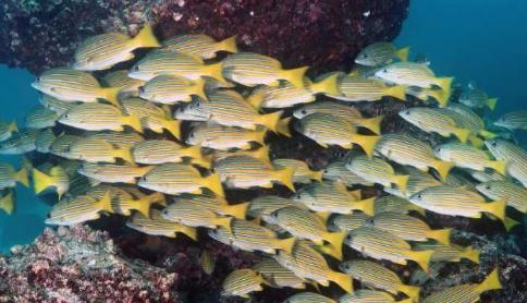 研究专注于海洋鱼类的进化决定论和融合