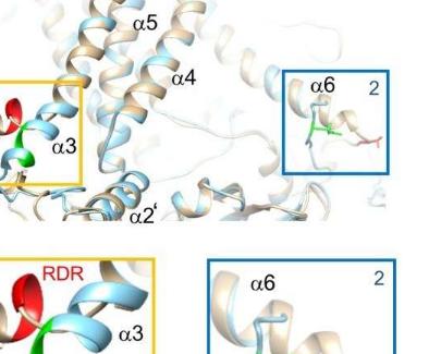 实验室细胞实验和计算机模拟已经揭示了调节蛋白质通道的分子机制