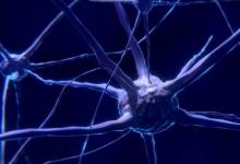 研究人员确定了在大脑亚区域工作的基因团队