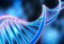 一种识别大脑中有助于人类的基因组区域的新方法