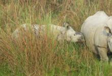 研究人员转向DNA侦探以法医证据协助犀牛偷猎起诉