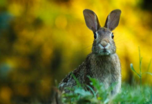 新研究突出了除草剂对野生生物的影响