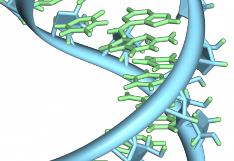 核糖体是细胞中的机器 使用来自mRNA的指令来合成功能蛋白