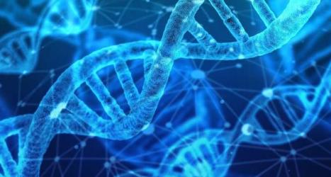研究人员使用神经网络研究DNA