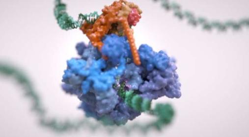 RNA聚合酶III的新3-D结构可能导致新的治疗方法