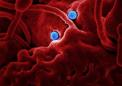光遗传学方法可以揭示肠道微生物如何影响寿命