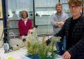 来自螨虫丝的新型纳米生物材料具有有前途的生物医学特性