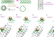 科学家首次模拟大规模病毒M13