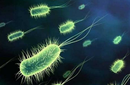 研究人员致力于预防由碳青霉烯酶生产的细菌引起的感染