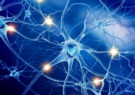 JHU科学家对计算机编程的神经机制进行解码