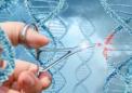 有关DNA修复酶的发现可能会导致某些癌症的新疗法