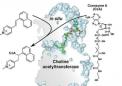 开发胆碱乙酰基转移酶抑制剂的新方法