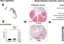 研究人员发现三丁基锡对海马生殖系统的负面影响