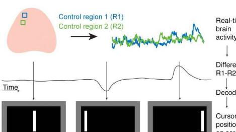 鼠标控制的鼠标可帮助研究人员了解故意控制