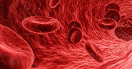 持久性IFNγ通过BST2消耗祖细胞