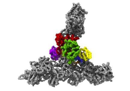 尖端技术揭示了细胞内的结构