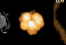 BioAFMviewer软件用于模拟生物分子的原子力显微镜