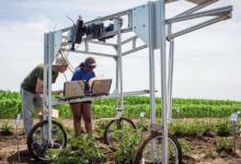 光合作用过程中发出的光信号用于快速筛选农作物