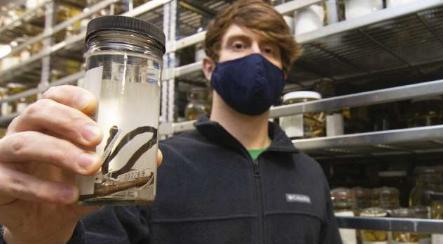 发现隐藏在生物多样性集合中的杰出新蛇种