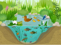 恢复生态系统的全球优先领域