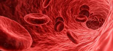 遗传性骨髓增生性肿瘤风险影响造血干细胞
