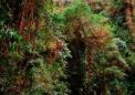 人造景观促进了两个通常分离的安第斯莺的共存
