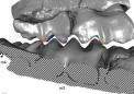 研究人员重建了早期哺乳动物的精确咬合