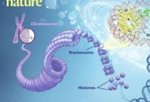 研究人员揭示了与核小体复合的NSD2和NSD3的第一个低温EM结构