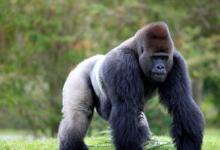 灵长类动物自发性皮层波门感知