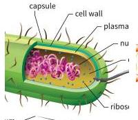 调节负责氯离子跨细胞膜转运的蛋白质通道