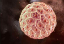 研究突破消除了对人类干细胞含有致癌突变的担忧