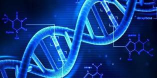 研究提出了耳聋的新型基因疗法