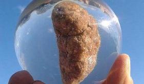 研究人员使用粪便样本为灰鲸建立压力和繁殖基线