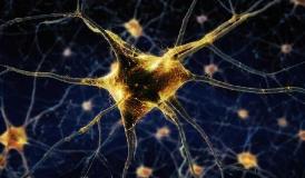 发现揭示了新型的脑细胞 对物体的距离和方向敏感