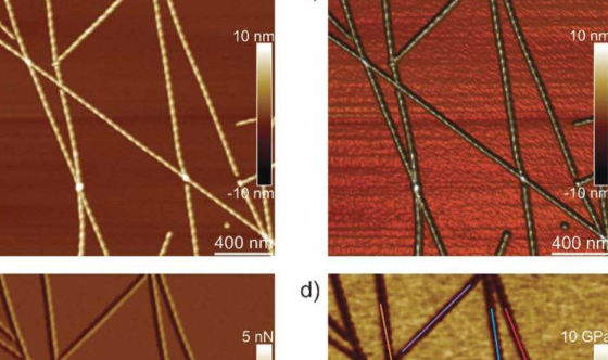 单个淀粉样原纤维演变成微晶