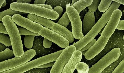 寄生虫入侵时肠道细胞会发出警报