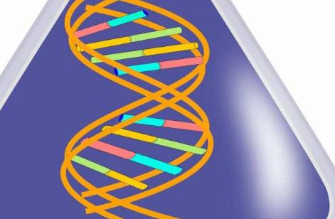 发现促进了RNA-DNA混合产生地球生命的理论