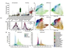自学习算法可以帮助分析生物图像数据